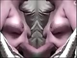 Wild tit bounce mirror image