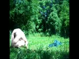 In a forest hard sex